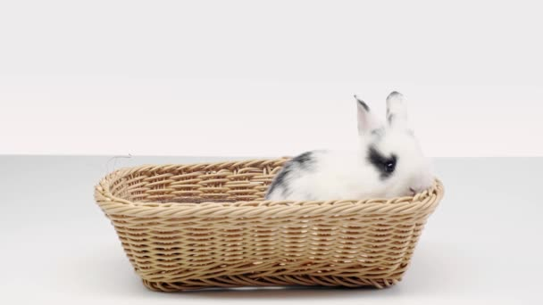 cute spotted rabbit wiggling nose, sitting and moving in basket on white background