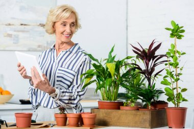 smiling senior woman holding digital tablet and looking at beautiful houseplants in pots