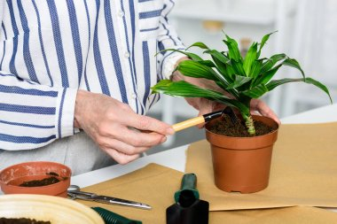 cropped shot of senior woman cultivating beautiful green plant in pot