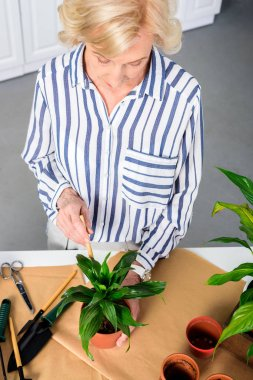 high angle view of beautiful senior woman working with potted plants at home