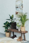 different shoes under wooden bench in corridor, potted plants on floor