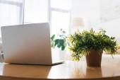 Fotografia Chiuda in su della pianta in vaso e laptop sul tavolo in legno nel soggiorno