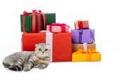 striped british shorthair cat near pile of gift boxes isolated on white background