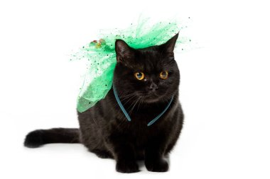 Black british shorthair cat in green festive bow isolated on white background stock vector