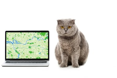 grey british shorthair cat near laptop with map on screen isolated on white background
