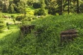 Photo old stumps in grass at beautiful park
