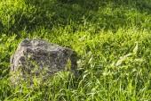 Fotografie plnoformátový záběr balvan ležící v zelené trávě slunečním záření