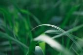 Fotografie makro snímek zelené trávy pro pozadí