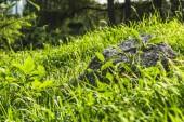 Fotografie close-up shot of boulder lying in green grass under sunlight