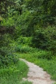 scenic shot rural pathway of green forest