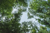 bottom view of blue sky through tree branches