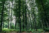 dramatický snímek ze zeleného lesa na zamračený den