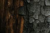 full frame shot fo cracked tree bark for background