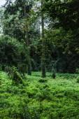 malebné záběr lesa s pozemní pokryté zeleným révy