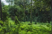Photo tranquil shot of forest with ground covered with green vine