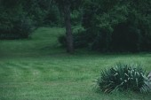 Photo green grass meadow in botanical graden