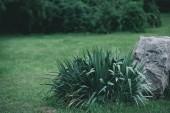 Fotografie dekorativní bush a rock na louce v botanické zahradě