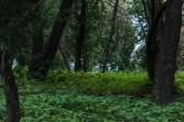 malebné shot z krásného lesa s pozemní pokryté listy