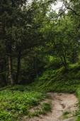 venkovské cesty v krásném zeleném lese na kopci