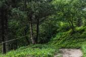 festői szemcsésedik-ból vidéki út gyönyörű zöld erdő a dombon