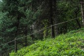 Photo green hill in pine forest with wooden fence