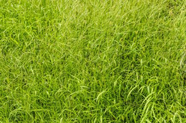 Full frame shot of green grass for background stock vector
