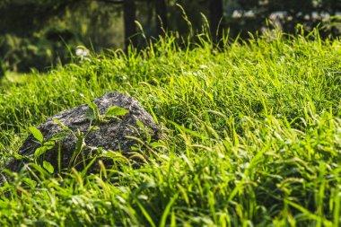 Close-up shot of rock lying in green grass under sunlight stock vector