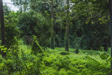 tranquil shot of forest with ground covered with green vine