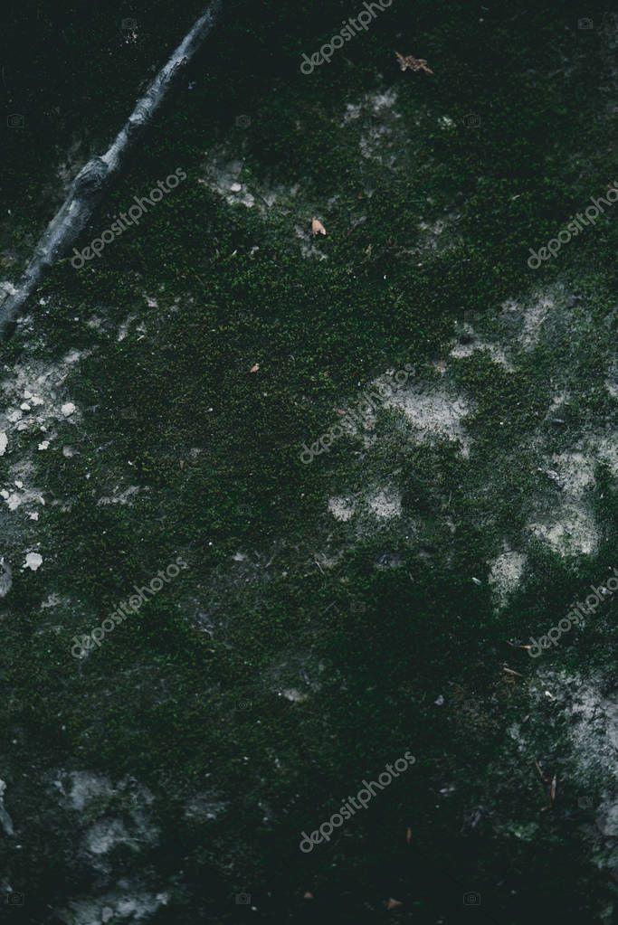 full frame shot of mossy ground for backdrop