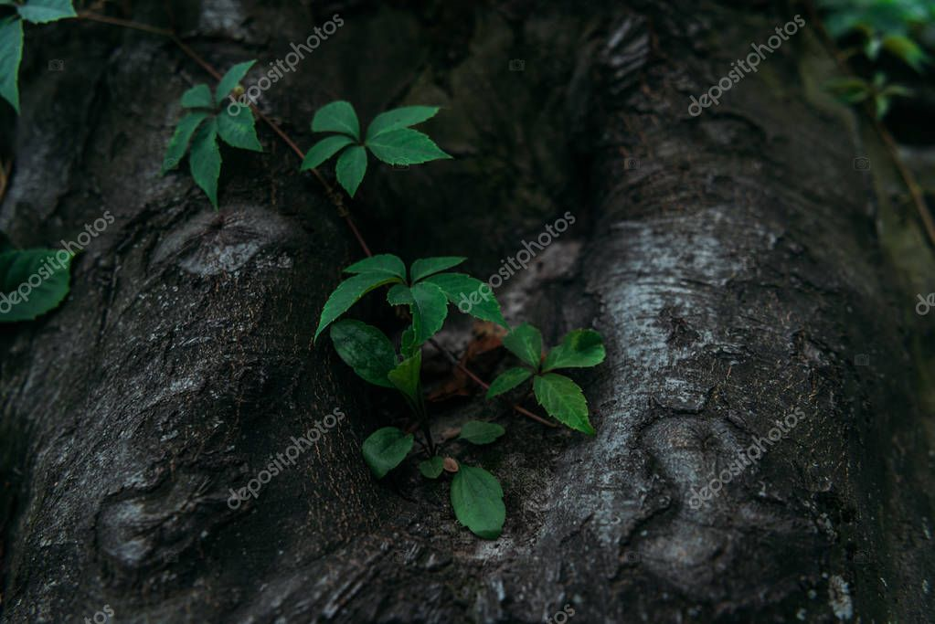 close-up shot of tree trunk with vine