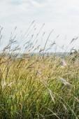 Fotografia fuoco selettivo di piante gialle in campo dautunno durante tempo ventoso