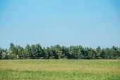 Photo green field, forest and blue sky at countryside