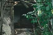 Fotografia vecchia costruzione con tavole di legno e foglie verdi abbandonata