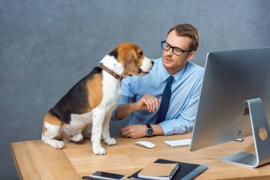 high angle view of young businessman in eyeglasses playing with dog at table in office