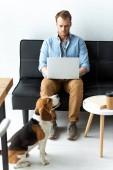 Fotografia libero professionista maschio bello lavora al computer portatile mentre beagle in esecuzione vicino a casa ufficio