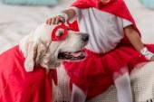 Částečný pohled rukou dětskou radost zlatého retrívra psa v kostýmu superhrdiny