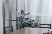 dřevěný stůl, šedá lednici a zelených rostlin v kuchyni