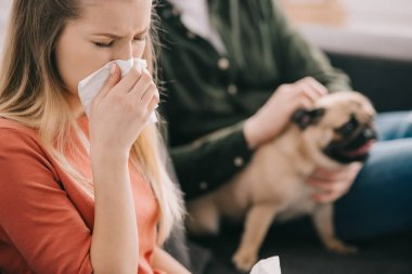 selective focus of blonde woman allergic to dog sneezing near man with pug