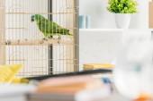Fotografie selective focus of green parrot sitting in bird cage near shelf with flowerpot