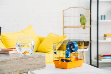 pet cage and aquarium with gold fish in light spacious living room