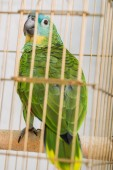 Fotografie selective focus of bright green amazon parrot sitting in bird cage