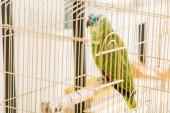 Fotografia focus selettivo di verde brillante pappagallo amazzone seduto in gabbia per uccelli