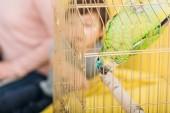 Fotografia focus selettivo di divertente pappagallo verde appeso a testa in gabbia per uccelli