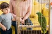 částečné zobrazení matky s roztomilým synem pohledem na zeleného papouška v ptačí kleci