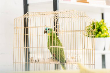 Selective focus of bright green amazon parrot sitting in bird cage near flowerpot stock vector