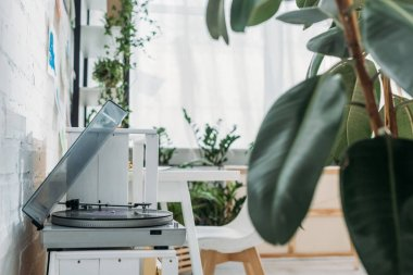 selective focus of record player with vinyl disk in room with green plants