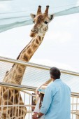 back view of father and kid in straw hat standing near fence and giraffe in zoo