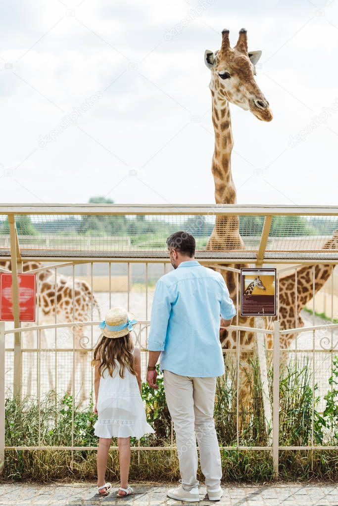 Back view of father and daughter standing near fence and giraffe in zoo stock vector