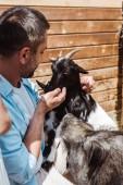 Fotografie Selektiver Fokus eines fröhlichen Mannes, der Ziege bei Wildschweinen im Zoo berührt