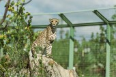 selective focus of wild leopard near green plants in zoo